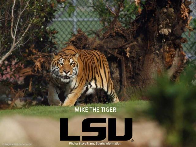 Mike-the-Tiger-1