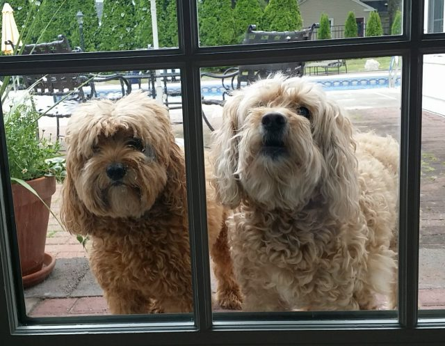 De två hundarna som bodde hemma hos Michele och Chris!